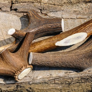 Staglers 100% Natural Deer Antler Dog Chew - Extra Large pet treat tough natural treat