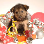 Dogs and puppies love Staglers deer antler dog chews for Christmas buy online