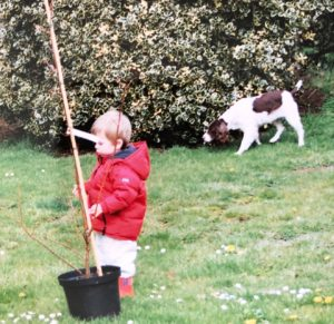 Child gardening with springer spaniel dog