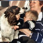 Springer Spaniel family dog Staglers