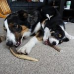WIN Pet Chews for your review