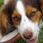 Clean teeth with Staglers to avoid Dog Breath