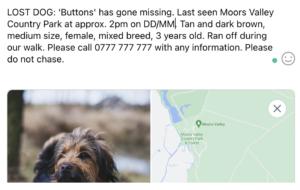 Example of social media lost dog post