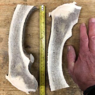 Deer Antler dog chew staglers cut in half lazy dog chew