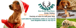 Staglers Deer Antler Dog Chews make pawfect Christmas Presents