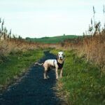Dog stood on pathway looking at camera
