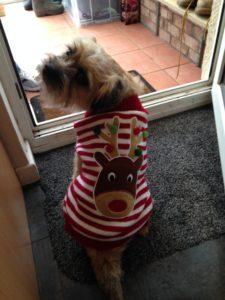 Dog in coat in winter