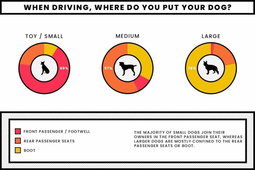 Where do you put your dog in your car, whilst you are driving
